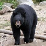 bearseason1007